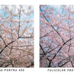 【撮り比べ】「Kodak PORTRA 400」と「FUJICOLOR PRO 400H」